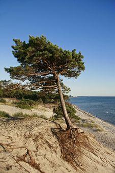 Tree On Beach Stock Photos