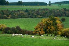Free Autumn Country Landscape Stock Photos - 6752943