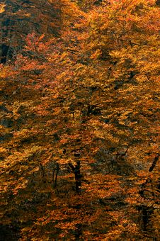 Free Autumn Background Royalty Free Stock Photography - 6753197
