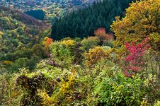 Free Autumn Forest Stock Photos - 6753203