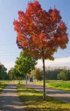Free Red Autumn Tree Stock Photo - 6753260