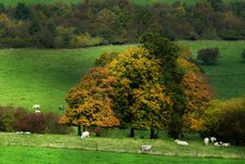 Autumn Country Landscape Stock Photo