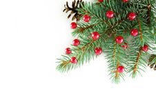 Free Branch Of New Year S Tree Stock Images - 6754344