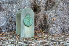 Certificate Post In Front Of Huge Oak Tree S Roots Royalty Free Stock Photo
