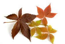 Free Autumn Leafs Stock Images - 6754594