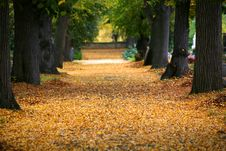 Free Autumn Alley Royalty Free Stock Photo - 6754765