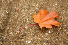One Brown Leave Stock Photography