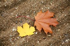 One Brown Leave Royalty Free Stock Photo