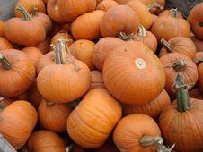 Free Little Pumpkins Stock Photo - 6755280