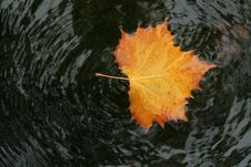 Free Autumn Leaf In Water Stock Images - 6755384