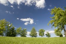 Free Green Trees On The Lawn Royalty Free Stock Photos - 6756338