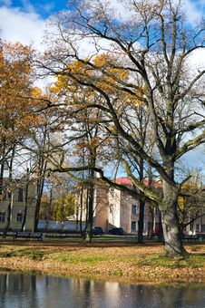 Scenic Tree In Autumn Scene Stock Photos