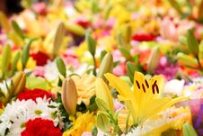 Free Flowers Background Royalty Free Stock Photo - 6756435