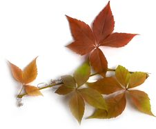 Free Autumn Leafs Royalty Free Stock Images - 6756629