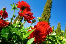 Free Beautiful Red Flowers Stock Photography - 6757802