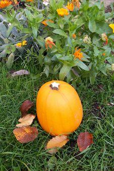 Free Orange Pumpkin. Stock Photo - 6758040
