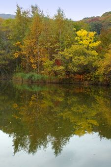 Free Autumn Forest And Lake Scenery. Stock Photo - 6759130