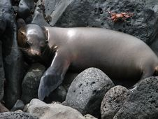 Free Sleeping Sea Lion Royalty Free Stock Image - 6759166