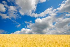 Free Field And Clouds Royalty Free Stock Image - 6759546