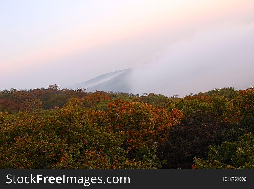 Foggy (hazy) forest.