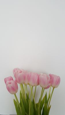 Free Tulips Royalty Free Stock Image - 67519936