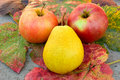 Free Two Apples And Pear Stock Photography - 6760022