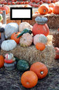 Free Assortment Of Pumpkins Royalty Free Stock Photography - 6765707