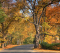 Free Autumn Road Royalty Free Stock Images - 6765719