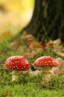Free Autumn Scene: Two Toadstools Royalty Free Stock Photo - 6760185