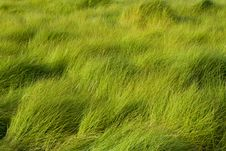 Free Grass Royalty Free Stock Image - 6761896