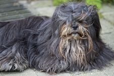 Free Dog With Long Hair Stock Photos - 6761953
