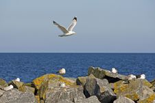 Free Seagull In The Flight Stock Photo - 6762000