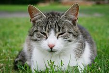 Free Sleepy Cat Stock Photo - 6762380