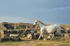 Free White Horse Stock Image - 6763181