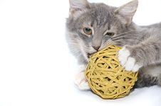 Kitten Playing With Ball Stock Photos