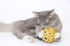 Free Kitten Playing With Ball Stock Photo - 6763500