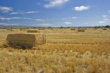 Free Hay Bales Royalty Free Stock Photography - 6765087