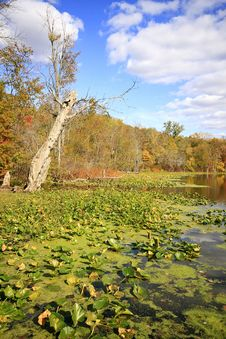 Free Water Lilies On Sand Lake In The Fall Stock Photos - 6765303