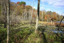 Free Bog In Sand Lake Stock Photo - 6765460