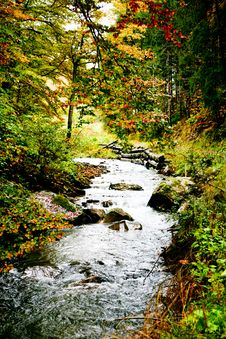 Free River In Forest Stock Photo - 6765510