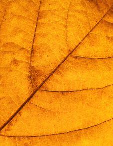 Free Autumn Leaf Stock Images - 6765524