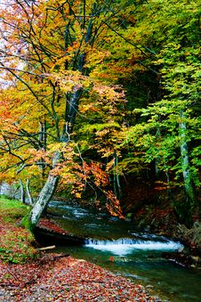 Free Autumn River Royalty Free Stock Photography - 6765607