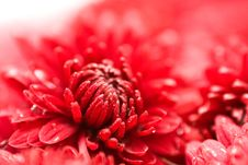 Free Water Drops On Red Colours. Stock Photos - 6765643