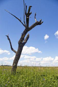Free Dry Tree. Stock Photos - 6765853