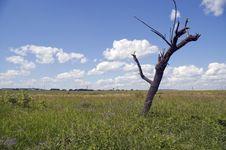 Free Dry Tree. Royalty Free Stock Photo - 6765855
