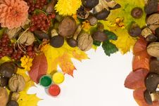 Free Colours Of The Autumn Royalty Free Stock Image - 6766766