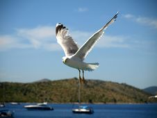 Free SEAGULL Royalty Free Stock Photos - 6766928