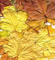 Free Autumn Background Stock Photography - 6767062