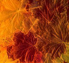 Free Autumn Background Stock Photos - 6767103