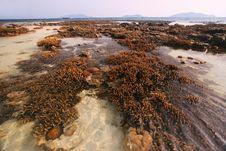 Free Pristine Coral Reefs, Malaysia Stock Photo - 6767840